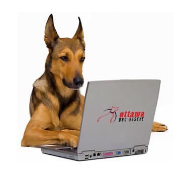 dogOnComputer