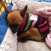 Cuddled.up[1]