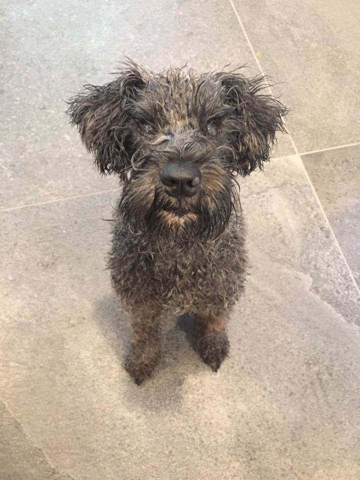 Dogs | Ottawa Dog Rescue