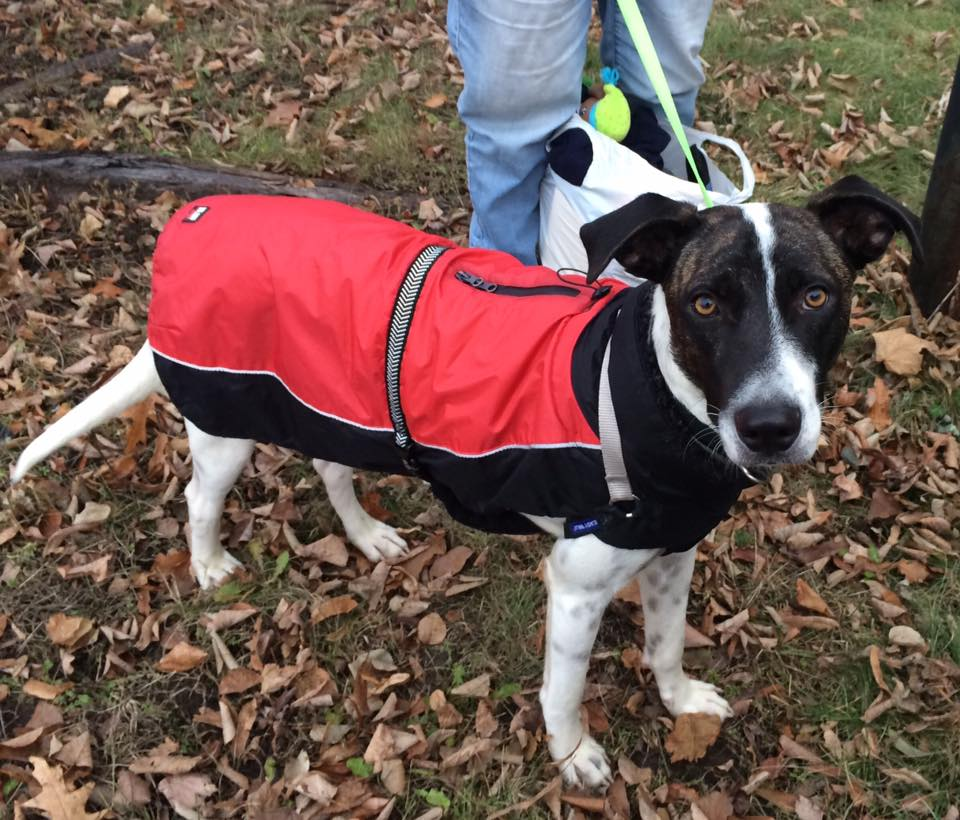 Bandit- 1 Year Old Mixed Breed- ADOPTED!