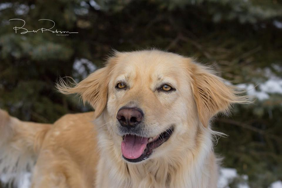 Betty- 3 Year Old Retriever- ADOPTED!
