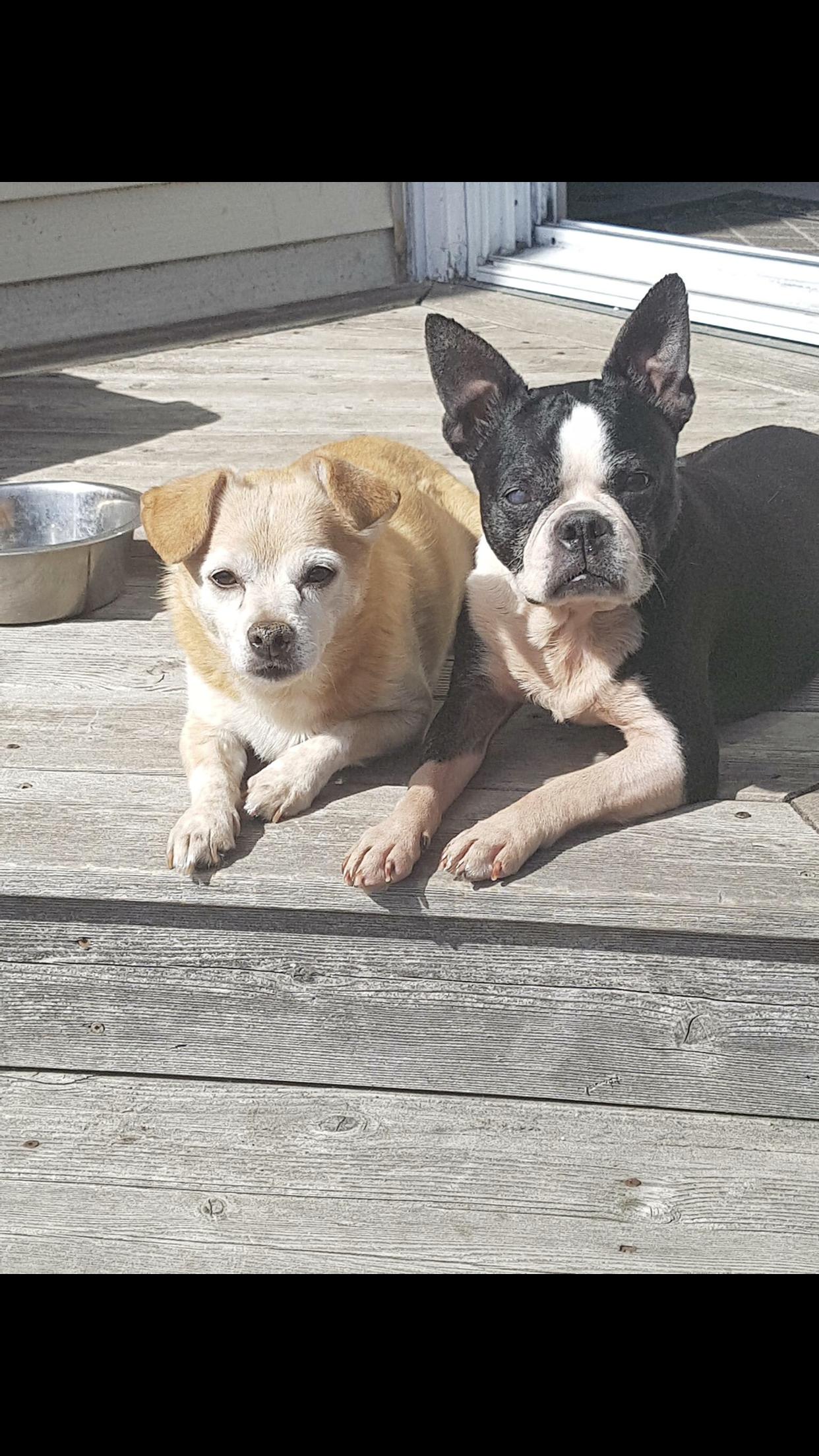 Ezra & Nova- Bonded Pair- ADOPTED!