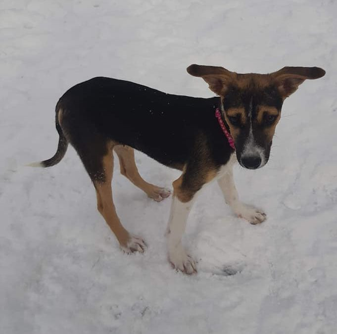 Molly – 3 Month old Mixed Breed – ADOPTED