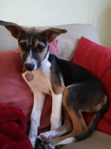 Molly - 3 Month old Mixed Breed - ADOPTED - Ottawa Dog Rescue