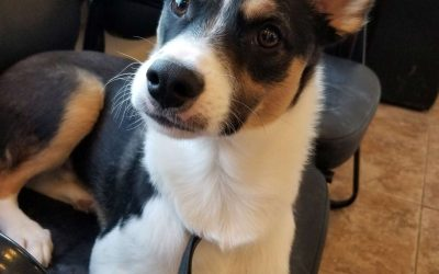 ROBBIE – 7 MONTH OLD TERRIER MIX – ADOPTED!