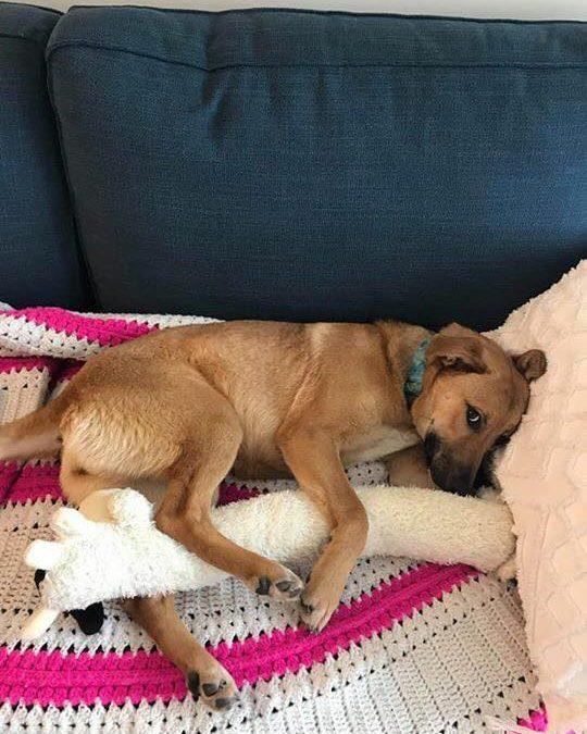 MIA – 1 YR OLD SHEPHERD MIX – ADOPTED!