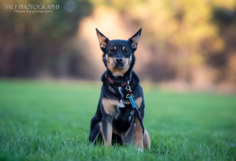 MARCY – 1 YR OLD TERRIER/PINSCHER MIX – ADOPTED!
