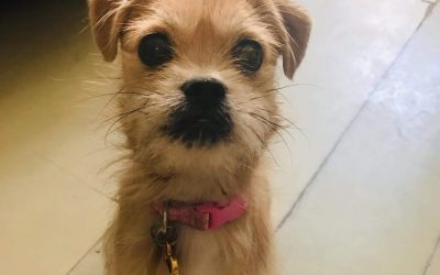 GRETA – 10 MONTH OLD BORDER TERRIER MIX