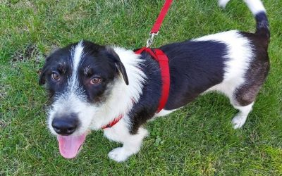 ADOPTED – WOOFUS – 2 YEAR OLD TERRIER MIX
