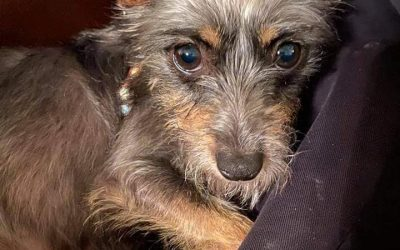 ADOPTED – AIRDRIE – 2 YEAR OLD TERRIER MIX