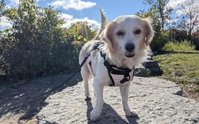 ADOPTED!!  MONA – 3 YEAR OLD TERRIER MIX